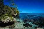 Recherche scientifique et innovation : le potentiel des micro-algues